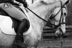 gallery-dressageb_w-2