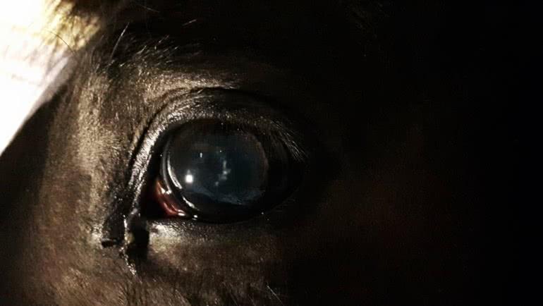 April: Finity – Juvenile Cataract