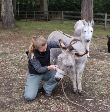 January: A Donkey Feature!