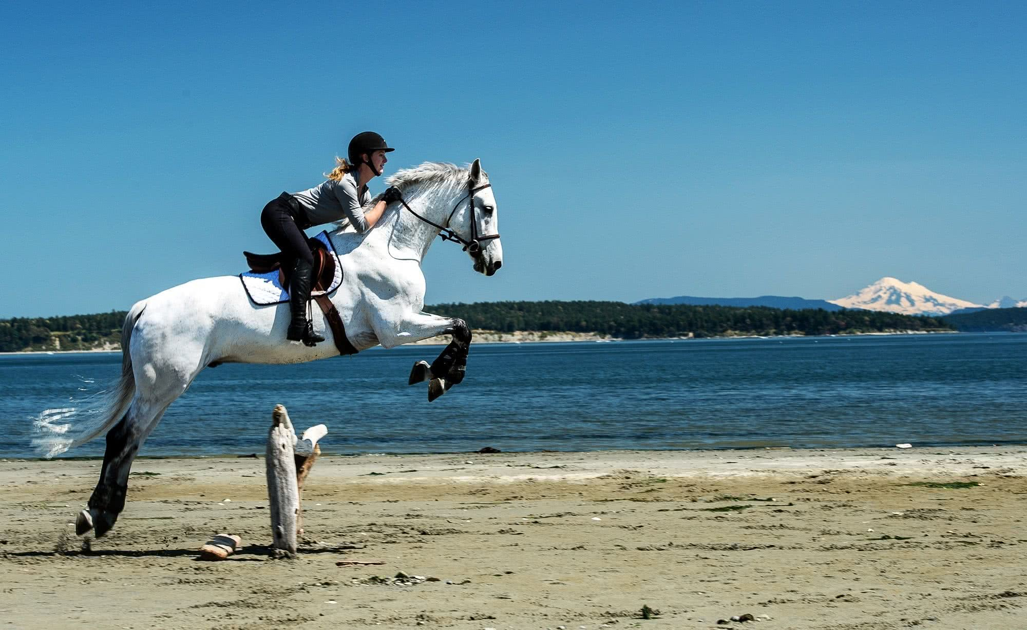 horse jumping on the beach