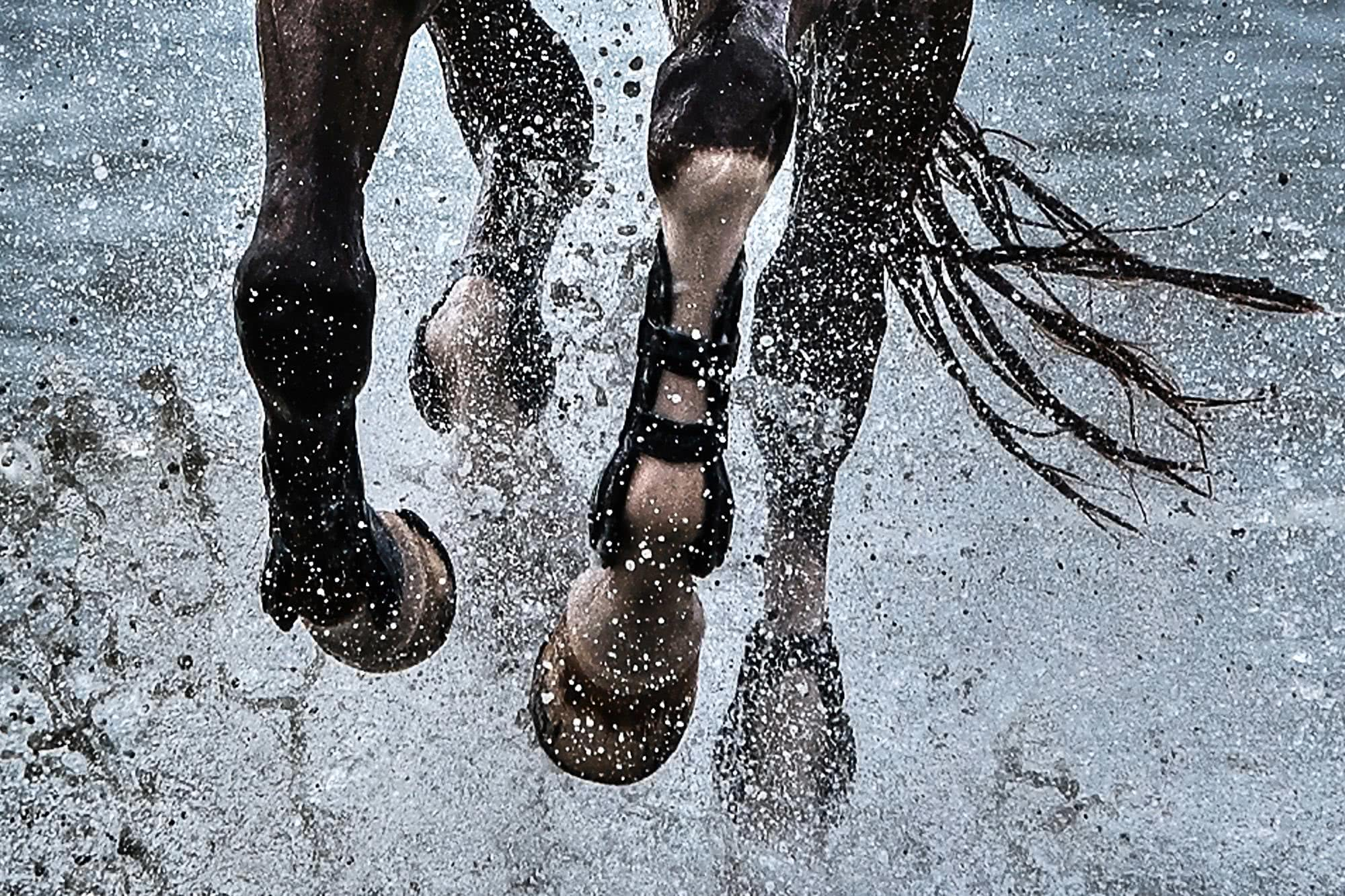 horse running on a beach with leg protection
