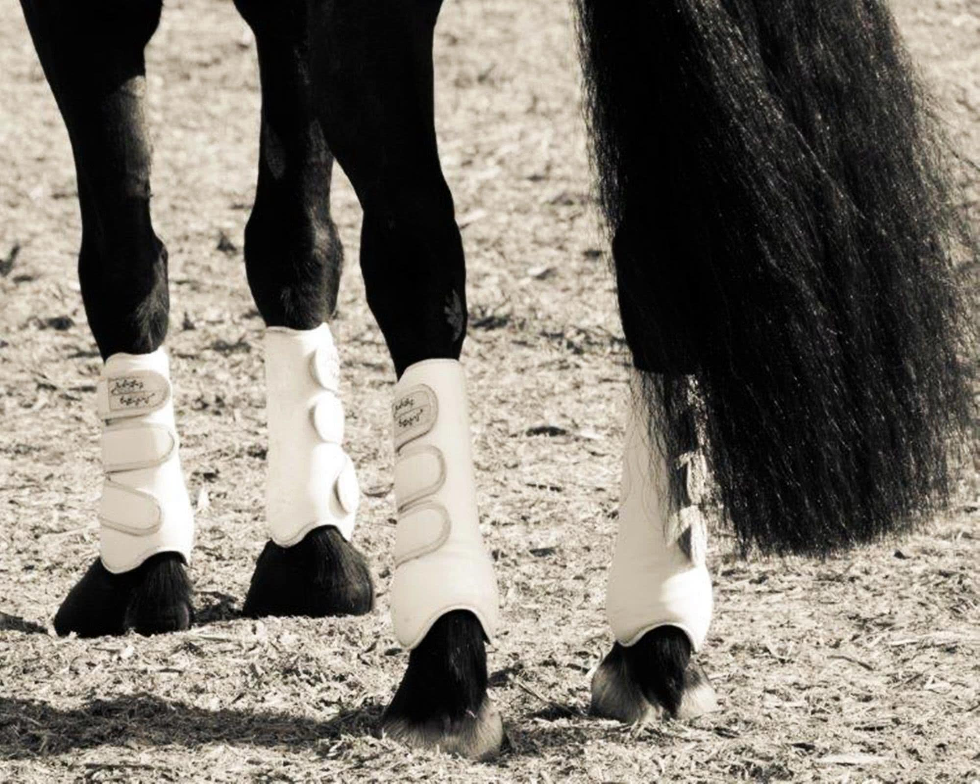 equine dressage care